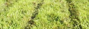 Rasen fräsen oder abtragen?