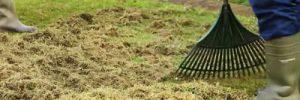 So lässt sich Moos im Rasen effektiv beseitigen