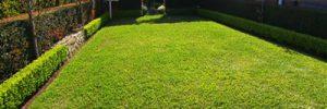 In 6 Phasen den perfekten Rasen anlegen