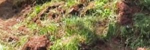 Rasen entfernen