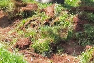 Rasen Entfernen Gartenfrase Experte