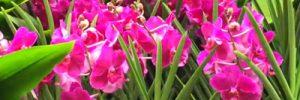 So klappt es mit den Orchideen im Garten