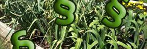 Kuriose Gesetzt die im eigenen Garten gelten und zu Bußgeldern führen können