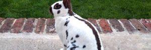 Kaninchen vom Garten fern halten