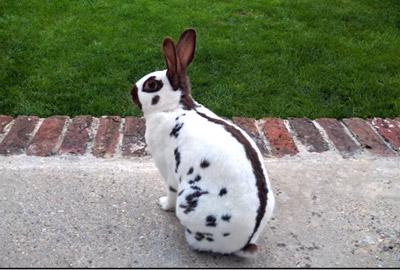 Kaninchen Vom Garten Fern Halten Gartenfräse Experte
