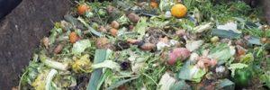Mit Kompost nachhaltig düngen