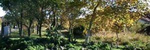 Der Garten im September – das muss erledigt werden